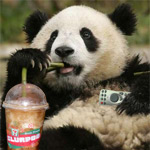 Click here to view 'Ordinary Panda'