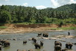 Click here to view 'Elephants - Sri Lanka'