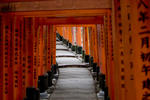 Click here to view 'Inari Shrine, Japan'