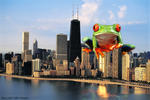 Click here to view 'Giant Frog Terrorizes Windy Ci'