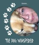 Click here to view 'Dog Whisperer'